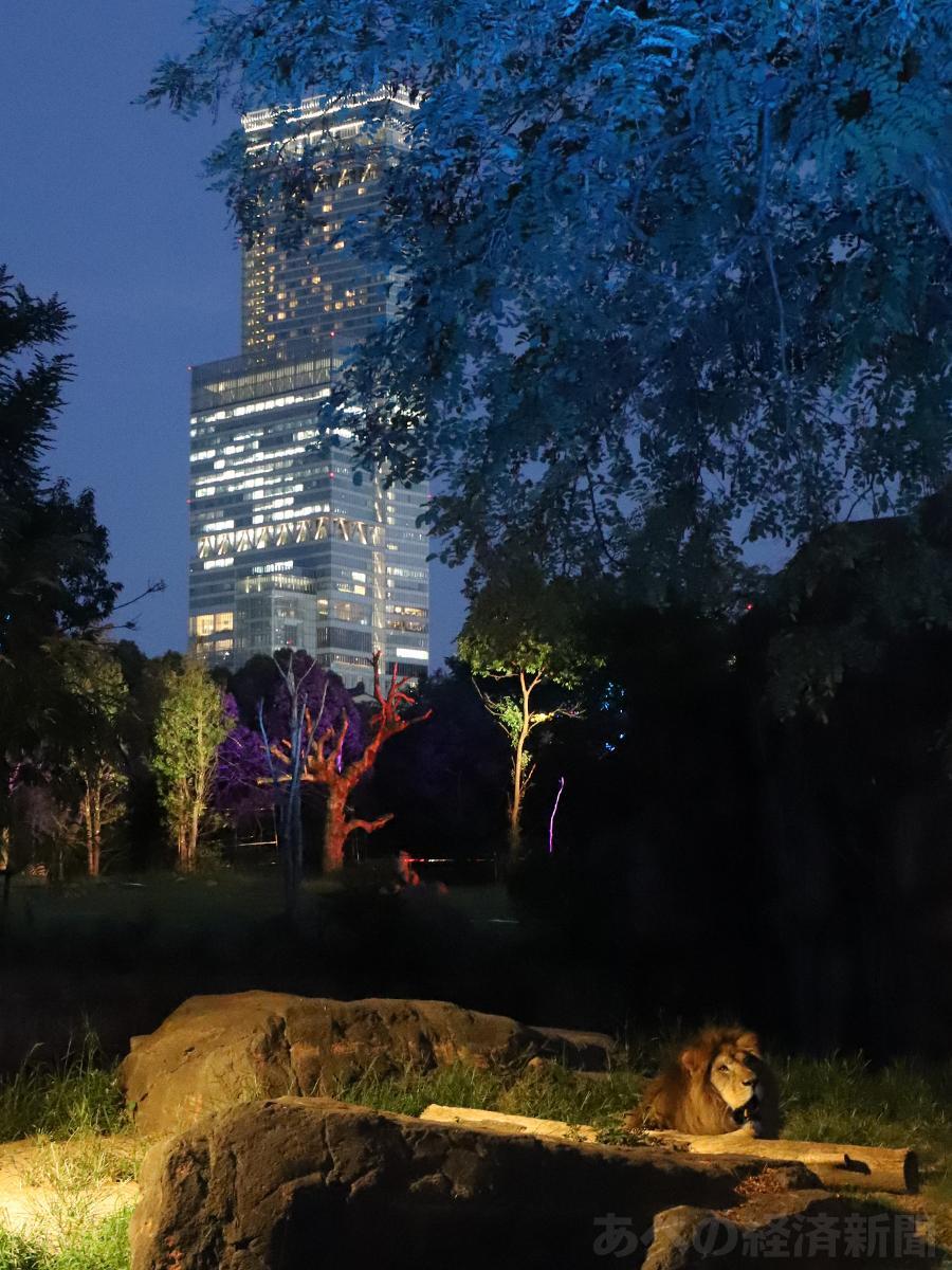 天王寺動物園アフリカサバンナゾーンを幻想的にライトアップ