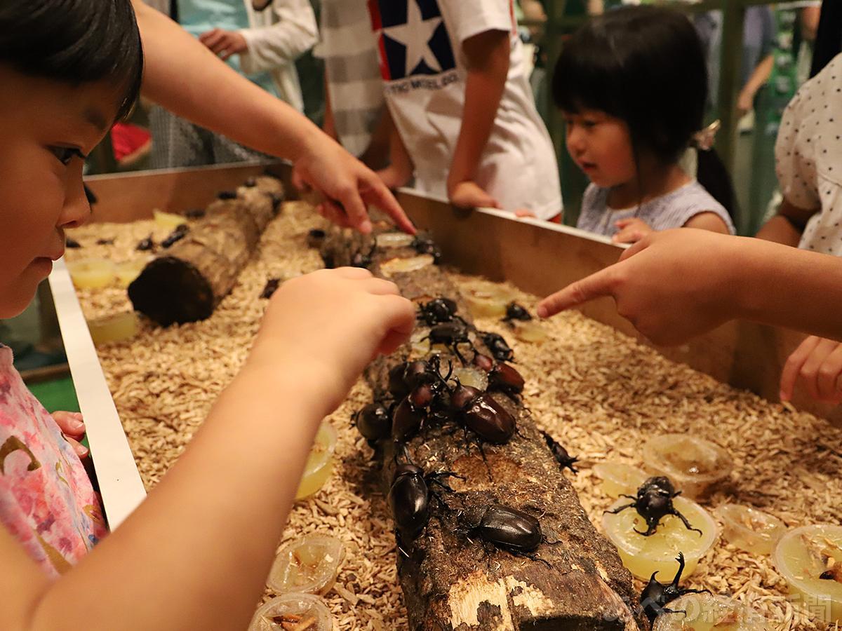 カブトムシと触れ合う子どもたち