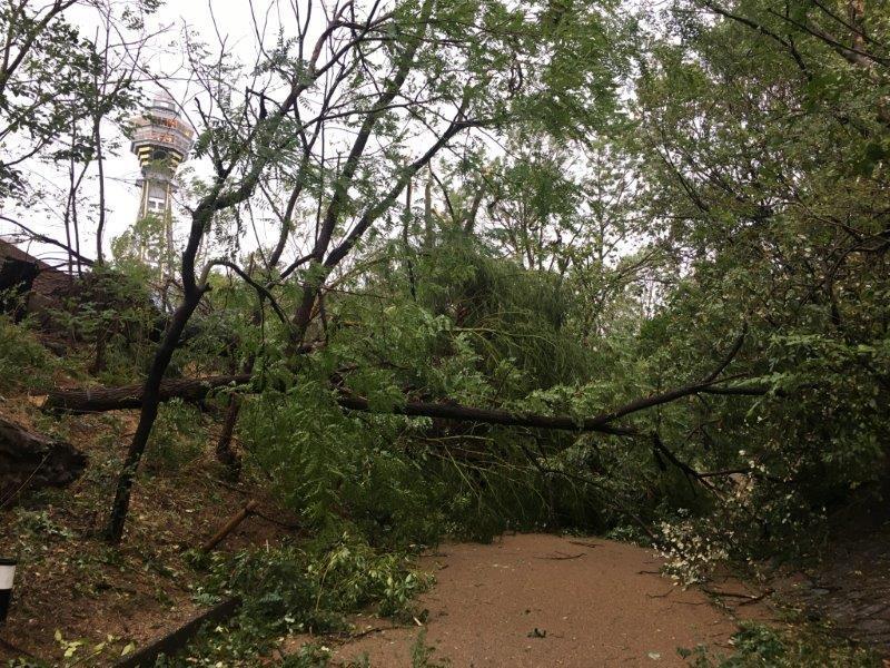 台風で倒木などの被害があった天王寺動物園(写真=天王寺動物園提供)