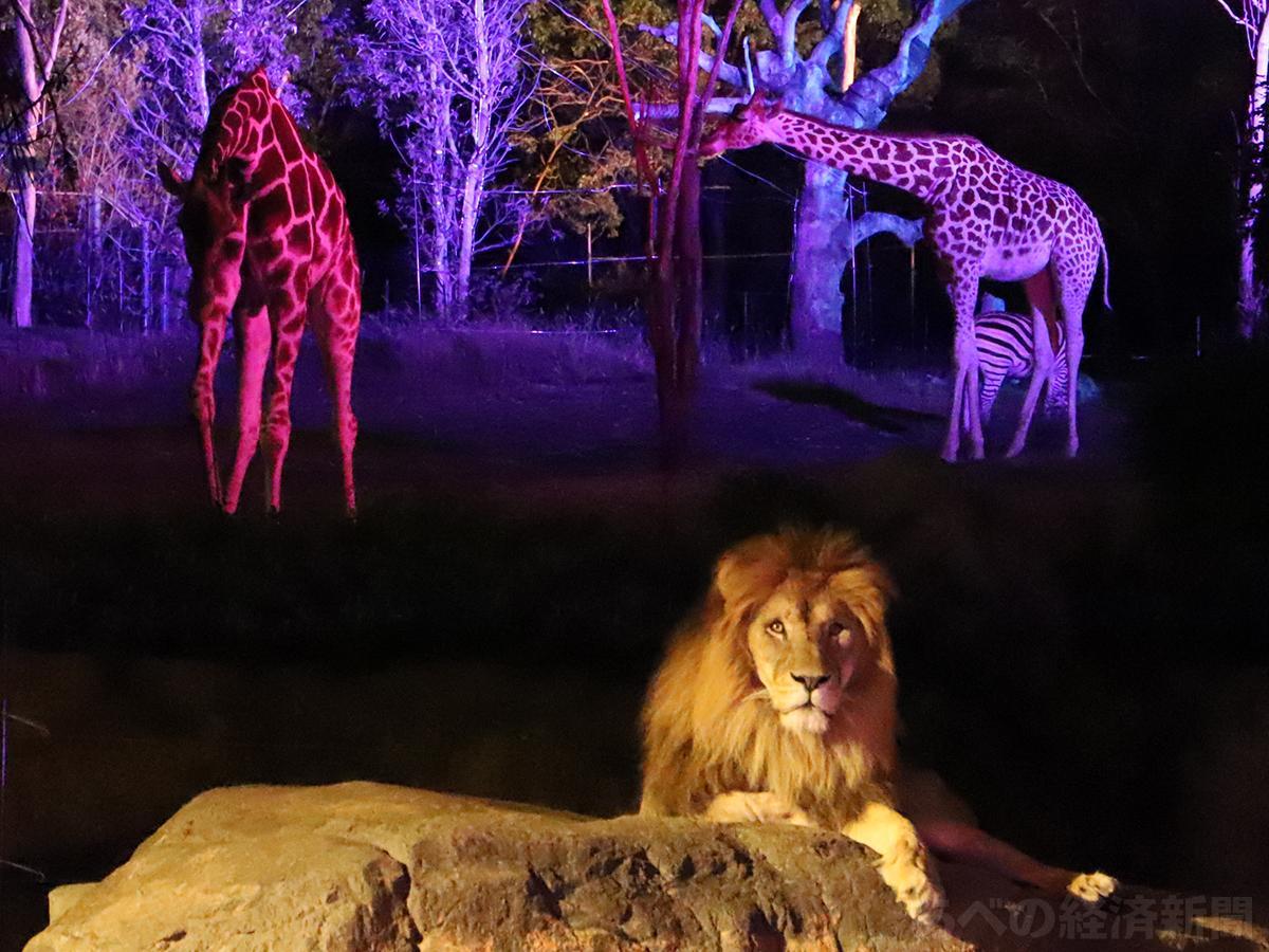 夜のアフリカサバンナゾーン(2日の内覧会で)