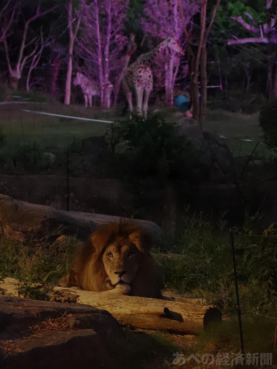 天王寺動物園で「ナイトZOO」(昨年開催時の様子)