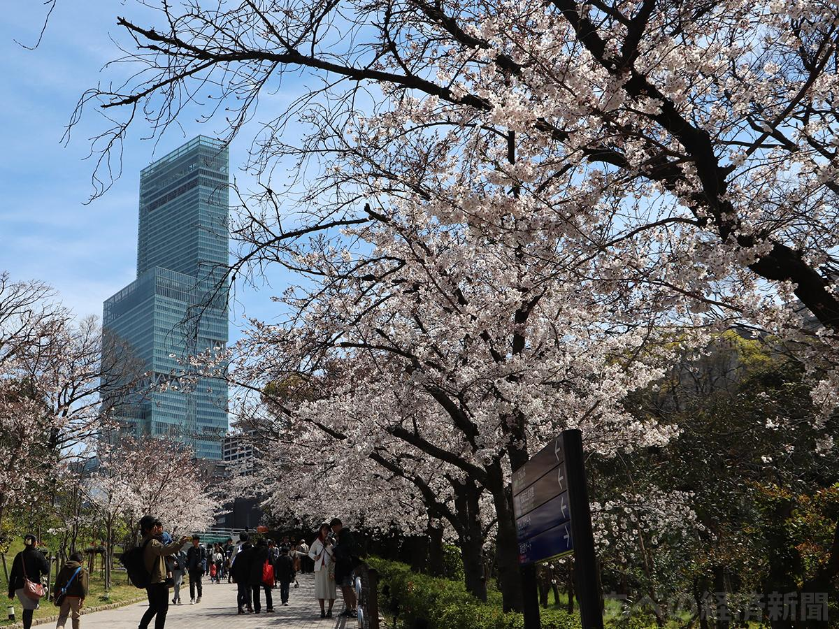 天王寺公園の桜が見頃に(写真=天王寺動物園)