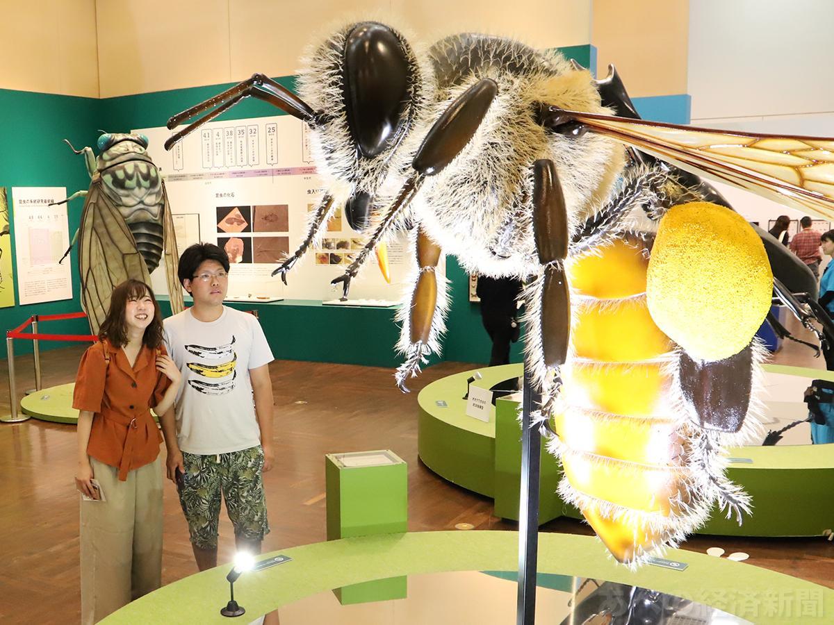 昆虫の巨大模型がお出迎え