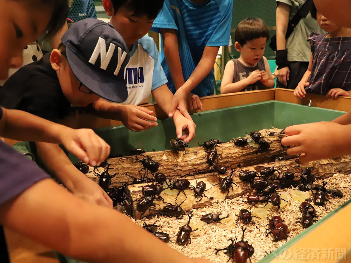 「カブトドーム」でカブトムシと触れ合う子どもたち