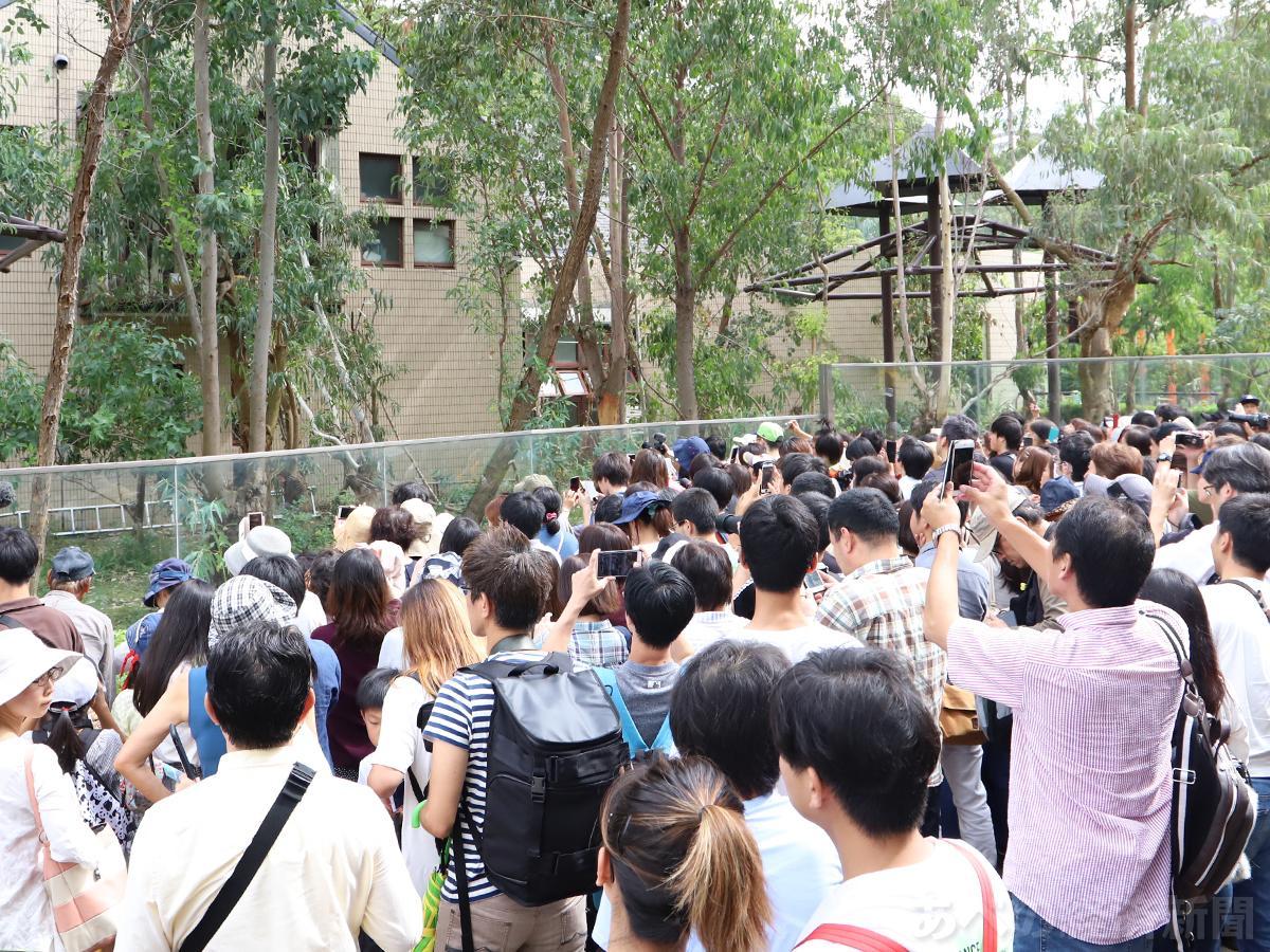 コアラ「アーク」のお別れイベントに多くの人