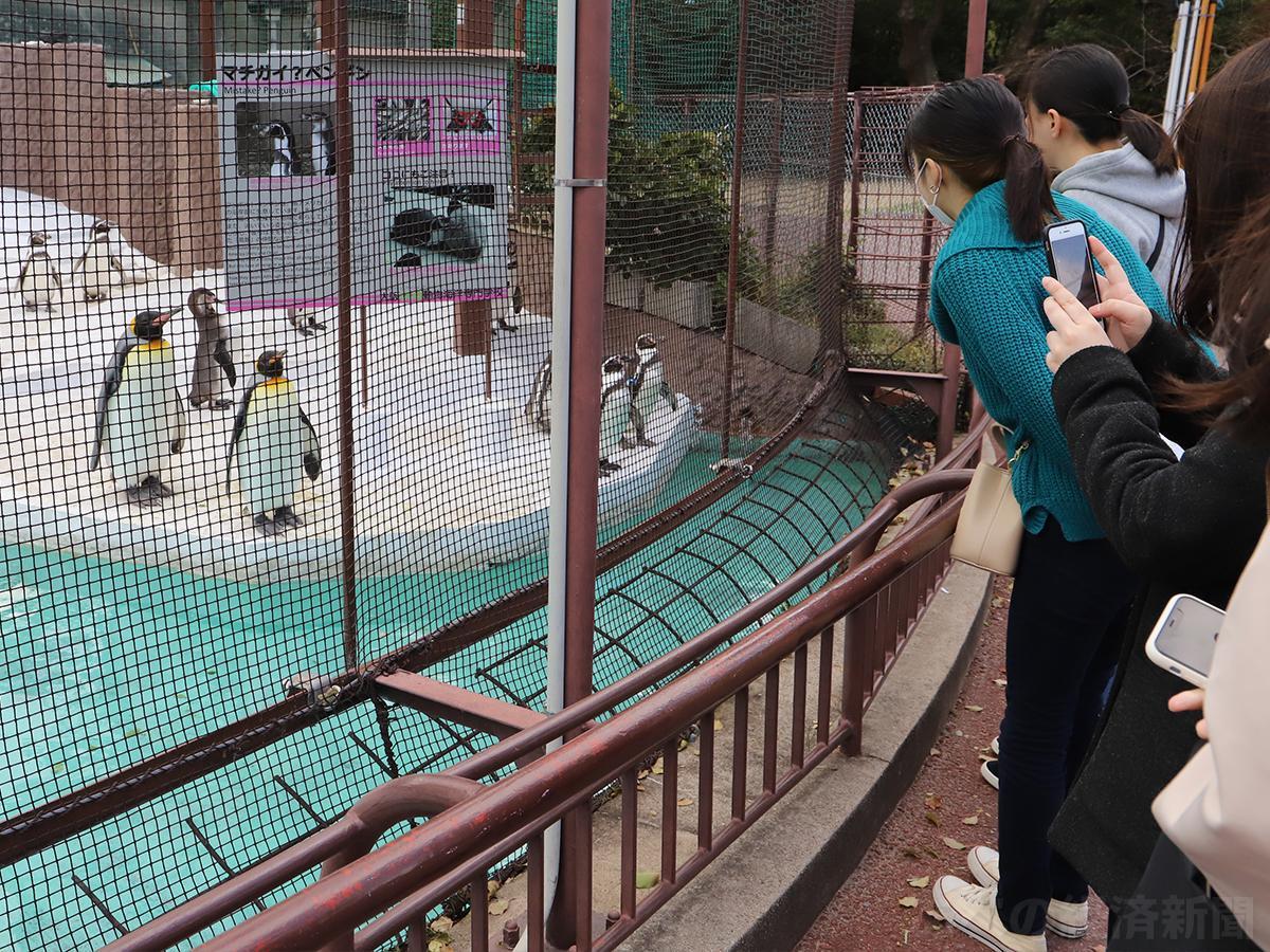 ペンギンを見つめる来園客(24日撮影)