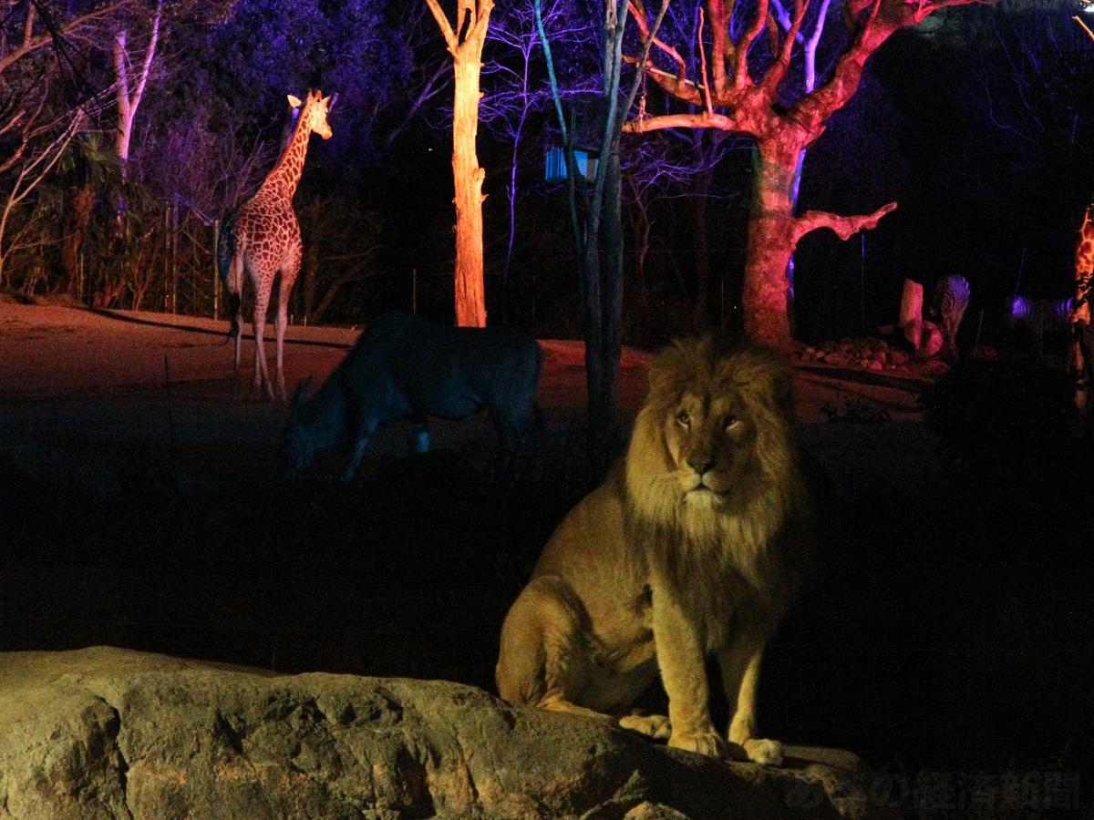 天王寺動物園のナイトZOO(以前開催時の様子)