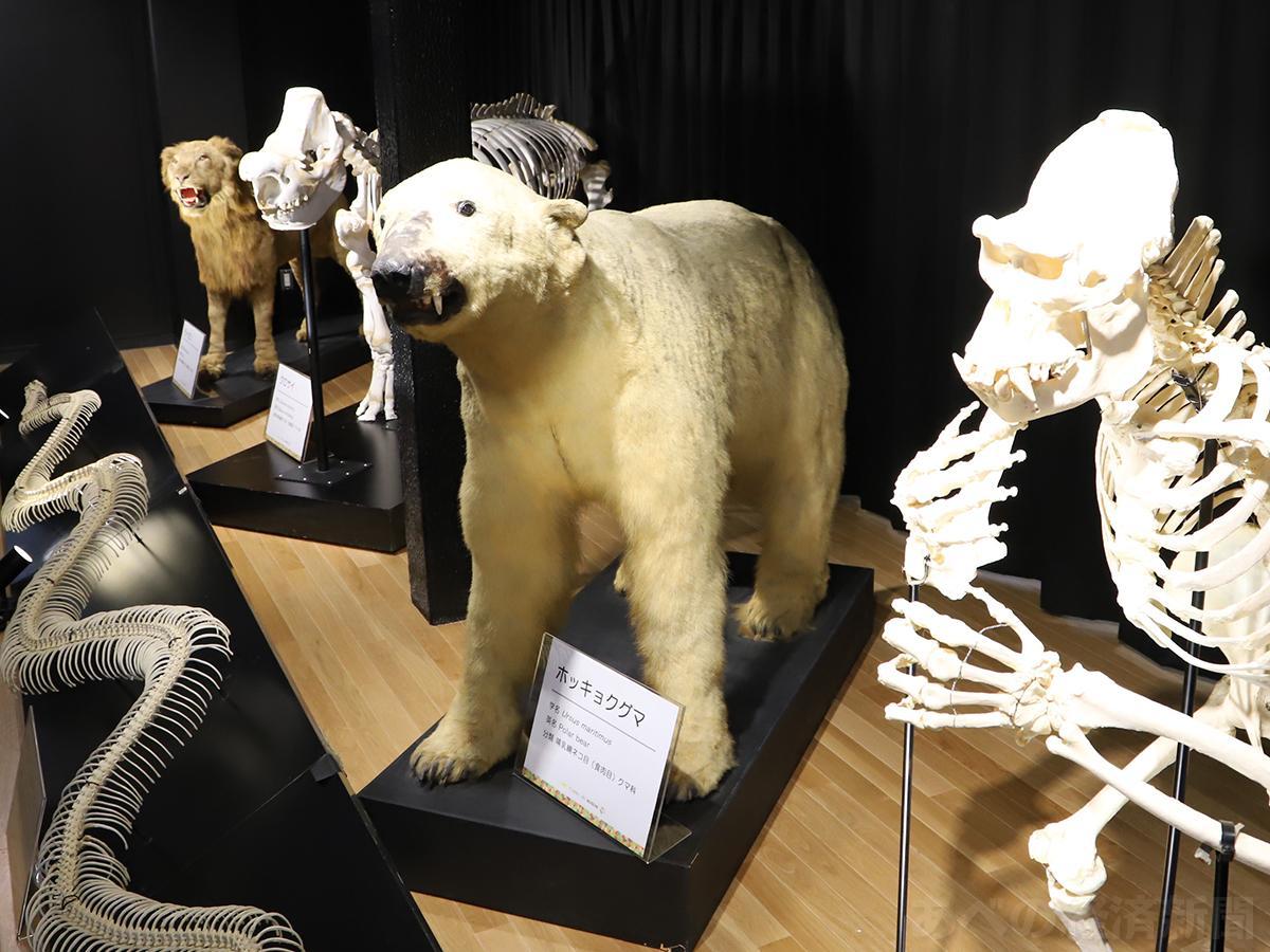 「てんのうじズーミュージアム」はホッキョクグマの剥製などを展示(8日の内覧会で)