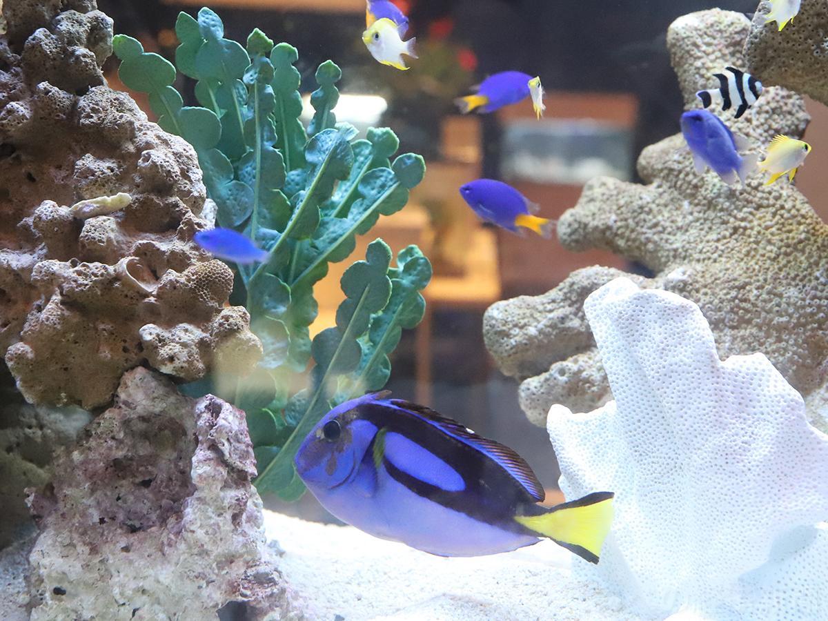 あべのハルカス近鉄本店で「世界の淡水・海水魚展」