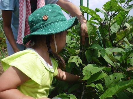 職員の指導を受けながら野菜を収穫する参加者たち