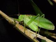 足立区生物園で初の試み「鳴く虫ナイト」 虫の音と音楽の競演