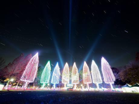 「光の祭典」のメーンツリー