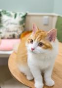 北千住に初の猫カフェ「リプミィ」 一番人気は「おもち」