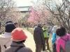 足立・都市農業公園で「早春まつり」 15種32本の梅見物、ガイドツアーも
