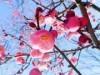 大谷田公園で梅まつり 出張動物園や俳句教室も