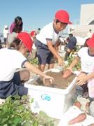 関西空港屋上で小学生がサツマイモ収穫-屋上緑化の副産物で