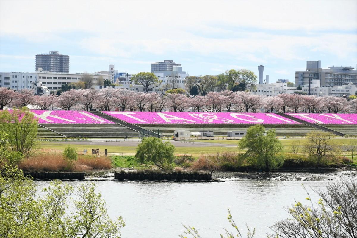 新荒川大橋からの景観(4月11日の様子)