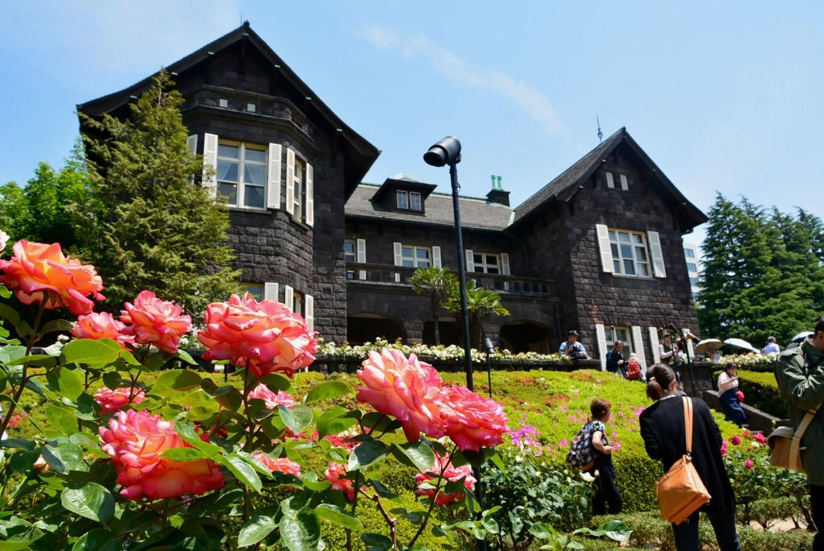 見頃のバラと洋館 この時期、多くの人が旧古河庭園に訪れる