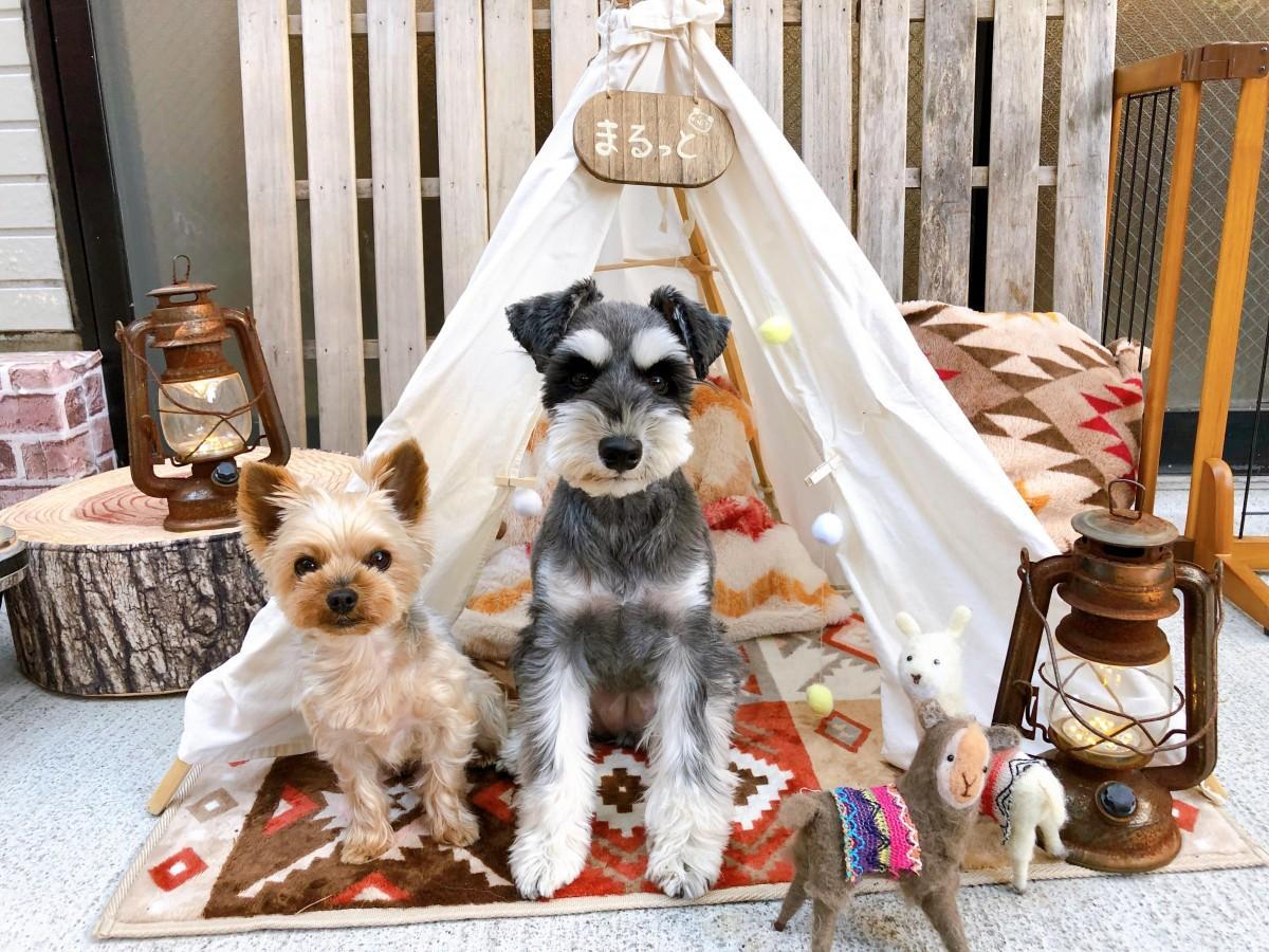武藤さんの愛犬ハクビちゃん(右)とちろるちゃん(左)