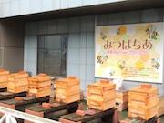 TBS屋上のミツバチプロジェクトが5周年 10万匹を通年飼育