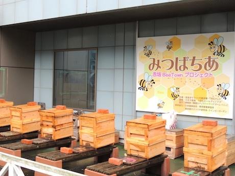 TBS放送センター低層階屋上に置かれたミツバチの巣箱