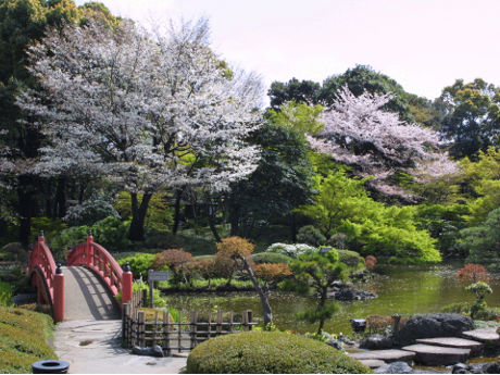 ニューオータニで「桜まつり」 庭園コンサートや夜桜めぐりも