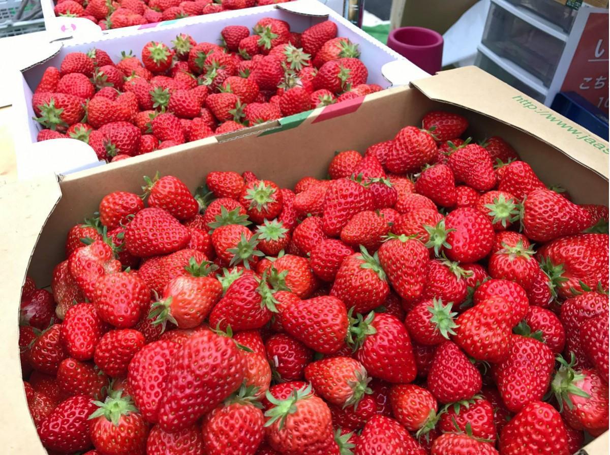練馬区の「加藤農園」では希少品種のイチゴも販売する
