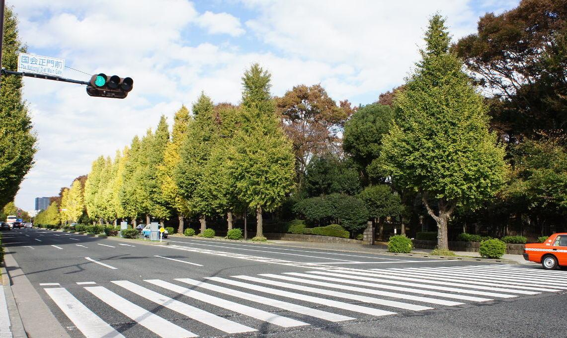 国会前交差点のイチョウ並木は日当たりの良いところから紅葉(2018年11月20日撮影)