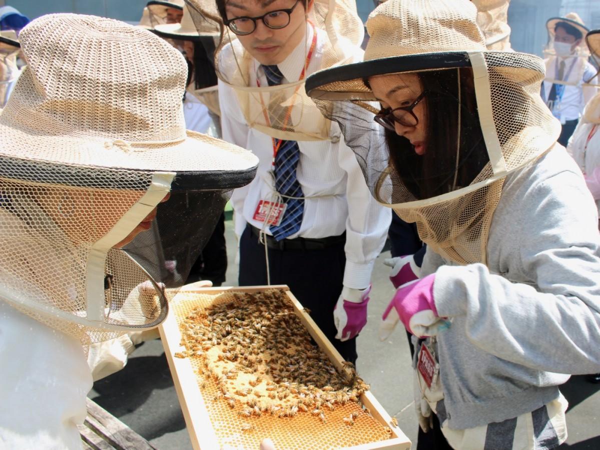 TBS8階の低層階屋上で飼われているミツバチ