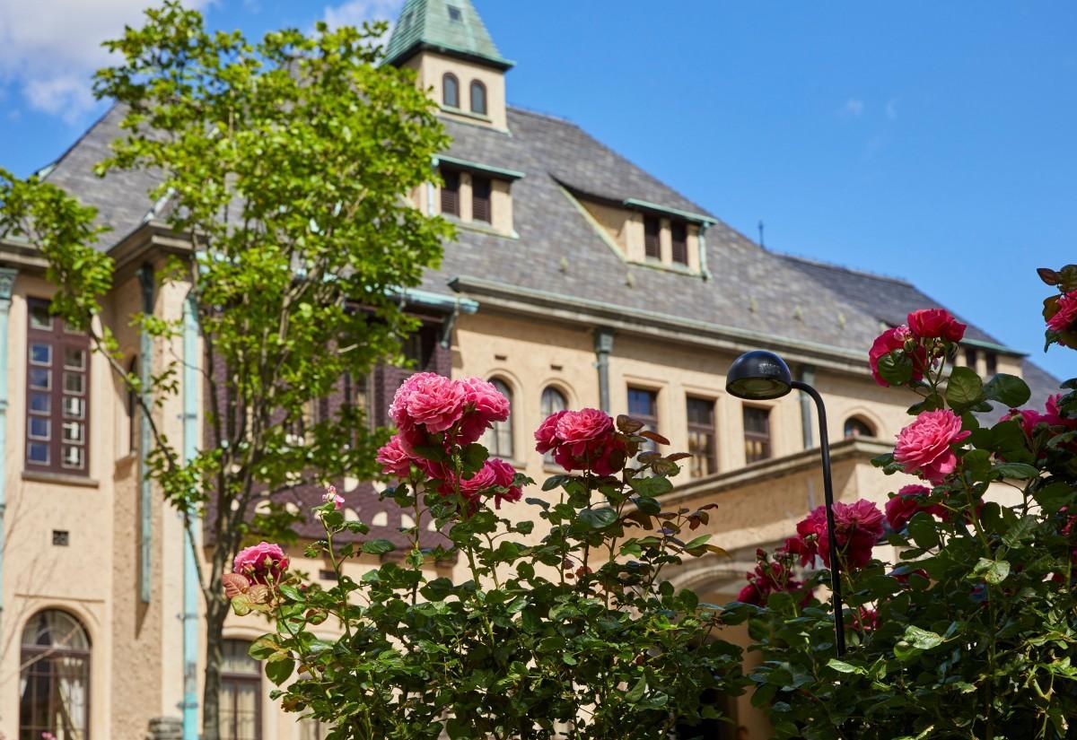 「赤坂プリンス クラシックハウス」を背景に咲く「ゲーテローズ」