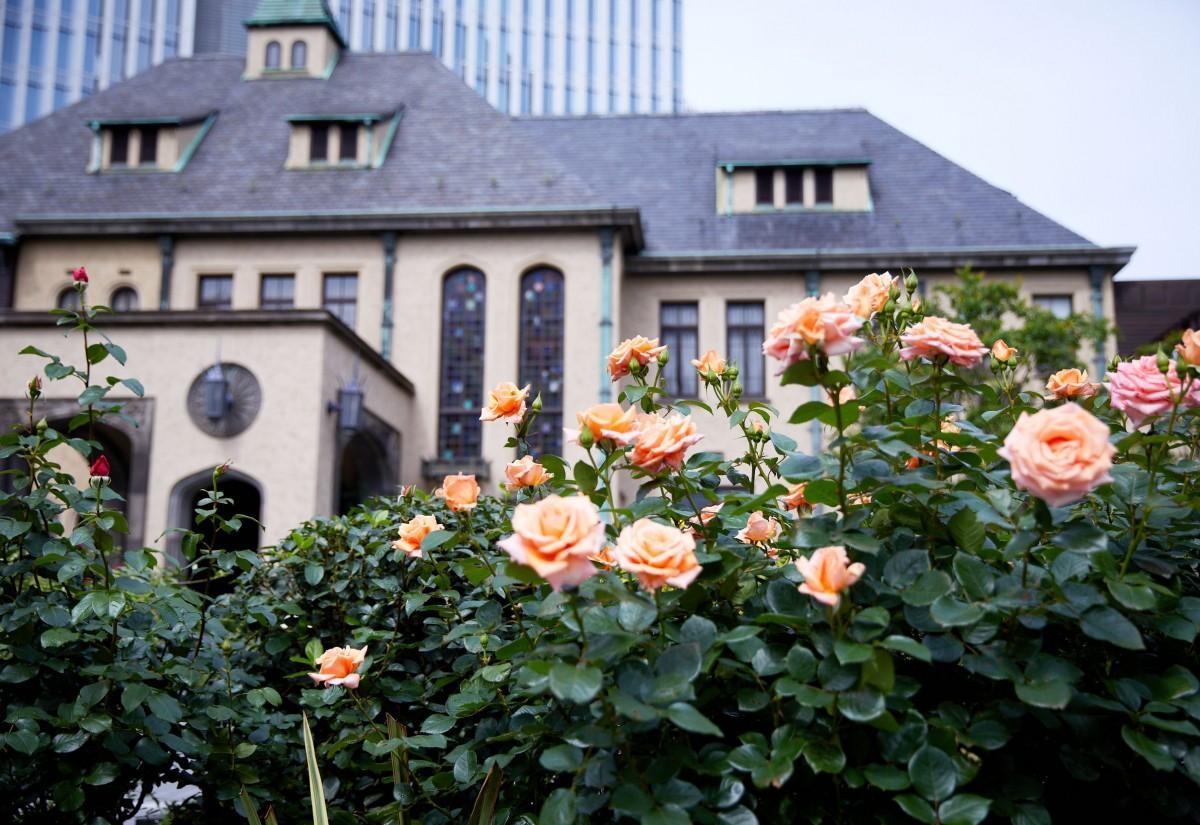 「赤坂プリンス クラシックハウス」を背景に今年の夏に咲いたバラの様子