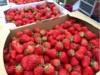 アークヒルズで「ストロベリーフェスティバル」 珍しい品種のイチゴも販売