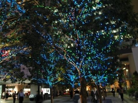 画像=西側街路樹のイルミネーション
