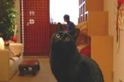 アキバに「本物」の猫カフェ「ねこ・JaLaLa」-7匹程度が「出勤」