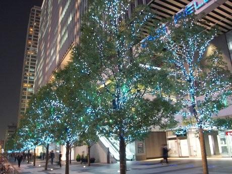 画像=田代通り沿い西側街路樹