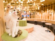 秋葉原に猫カフェ「MoCHA」 20匹在籍、おしゃれで清潔な店内特徴