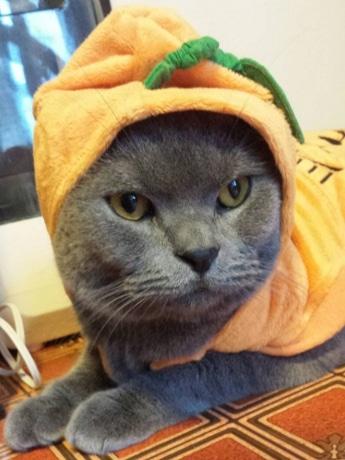 「cat cafe nyanny」 ハロウィーンコスプレイベント練習中のノエルさん