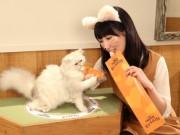 秋葉原などの猫カフェでキャットフードコラボ「ピューレ KISS BAR」