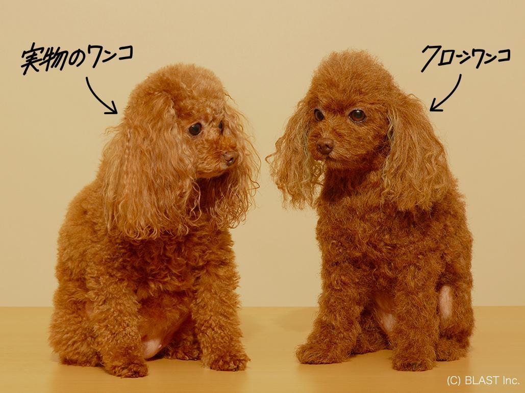 (左)実物の犬 (右)「クローンワンコ」