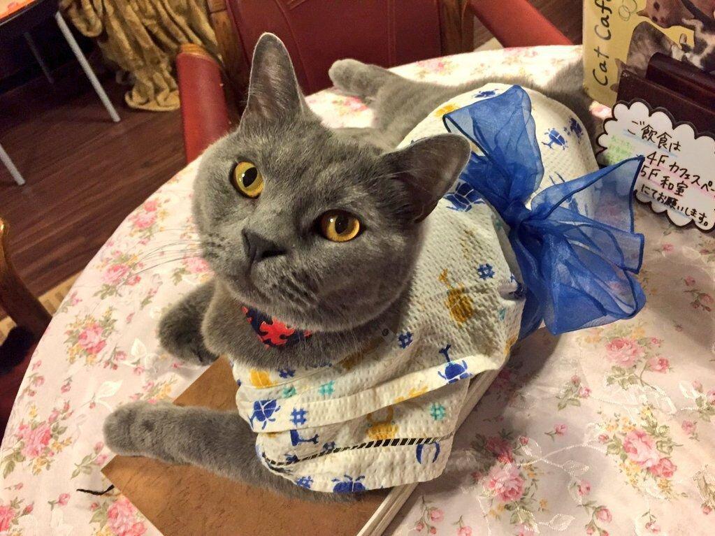 浴衣を着た猫スタッフのノエルくん