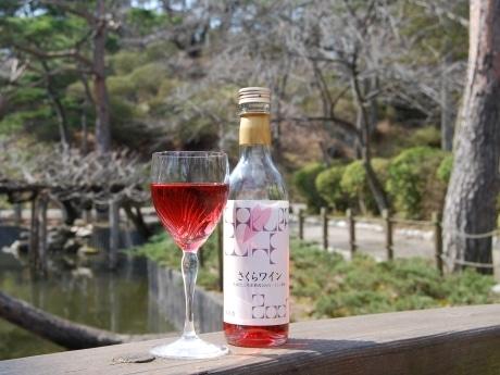 開花前に人気の「さくらワイン」。桜の名所・千秋公園(秋田市)で