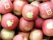 アップルマーク入りの「リンゴ」話題に-五城目町の男性が趣味で作る