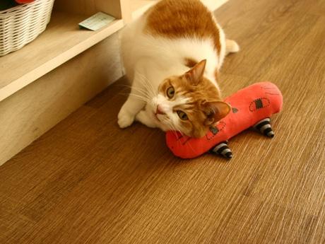 猫が題材の絵本などを扱う「かぎしっぽ」店主・佐藤明子さんの飼い猫「花子」