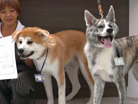 秋田犬の「し~なだいすけ」(左)と「し~なさくら」