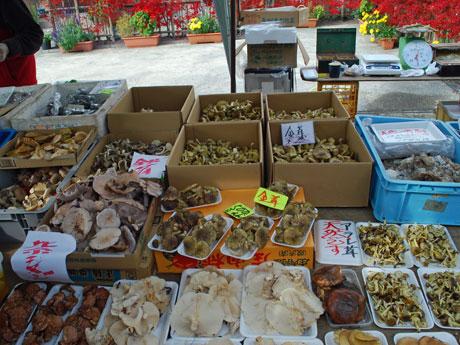 さまざまな種類のキノコが並ぶ「五城目朝市」