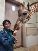 秋田の動物園でキリン飼育員が講演 「ハズバンダリートレーニング」を解説