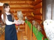 秋田に初めての「ふくろうカフェ」 岩手のペットショップが東北3店舗目