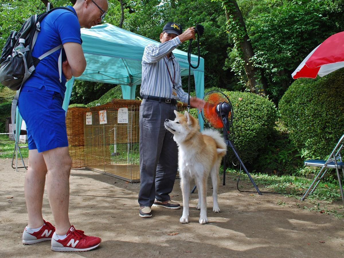 「秋田犬ふれあい処in千秋公園」を訪れた観光客に愛嬌(あいきょう)を振りまく秋田犬