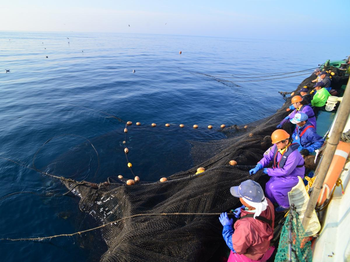 秋田県漁業協同組合が開く漁業研修・体験会の様子