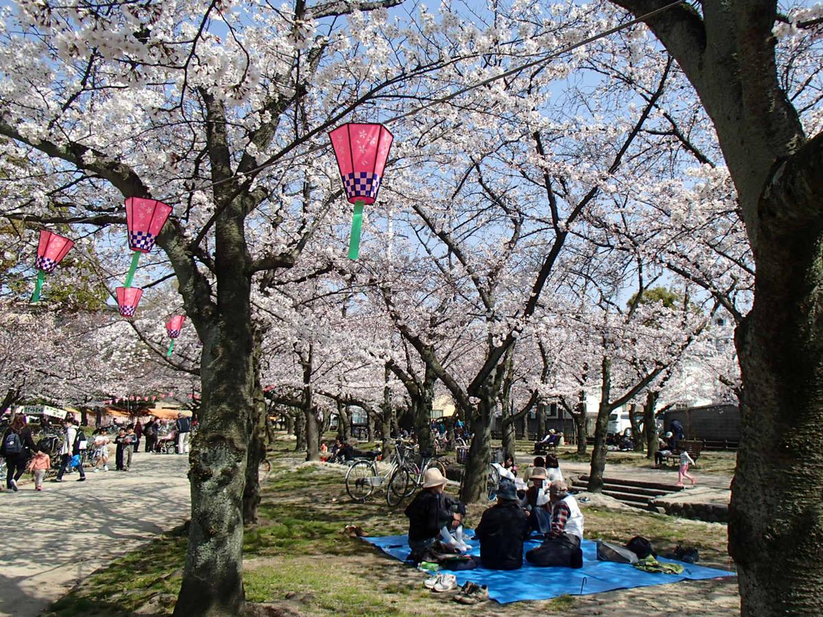 ぼんぼりがともされた桜の下で憩う人々(過去の様子)